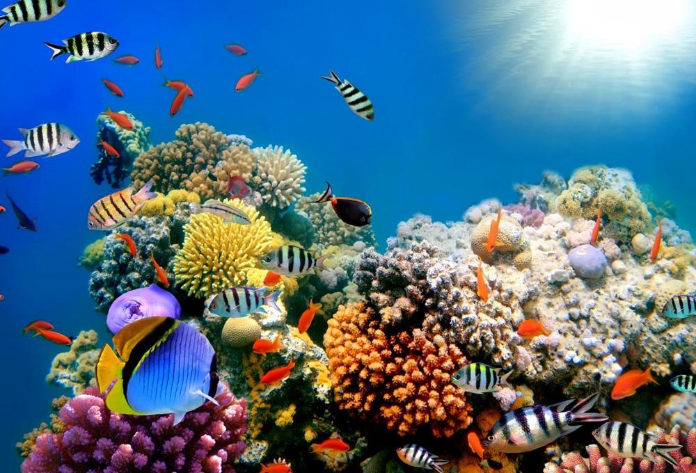 barrera de coral 2