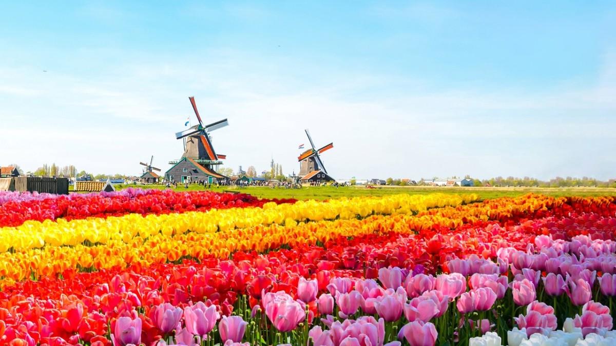 Los 10 campos de flores más hermosos del mundo
